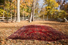 American Sarouk Carpet
